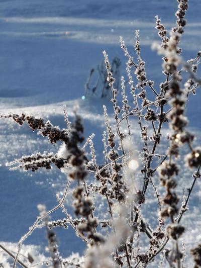 Winterwanderweg Winterkopf (Rundwanderweg 7) Medebach